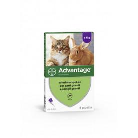 Advantage 4pip 0,8ml Spoton
